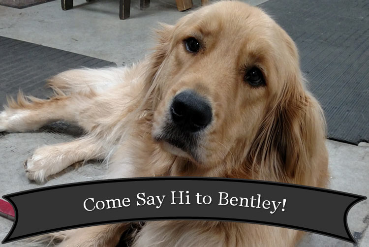 Bentley loves to see the folks that stop in at Harbor Hardware Store in Door County, WI